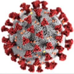 CORONAVIRUS  Reconfinement